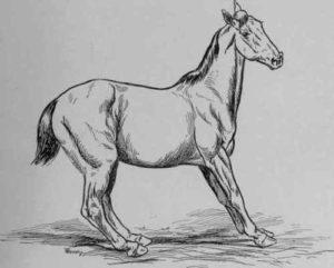 Plaatje van een bevangen paard