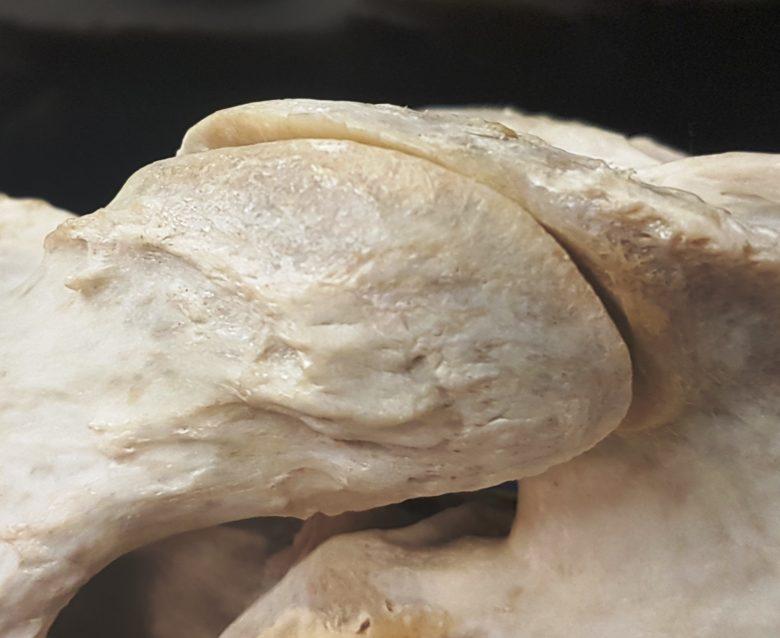 Halsproblemen bij het paard: artrose van de facetgewrichten