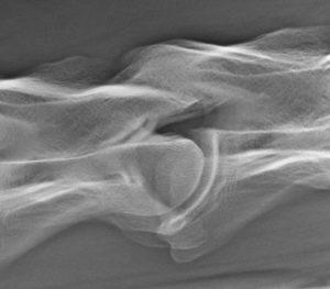 Röntgenfoto facetgewricht hals paard