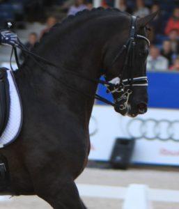 Hals in oprichting paard