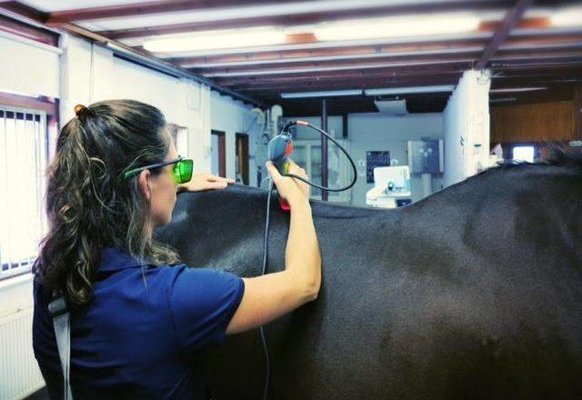 Lasertherapie bij paarden