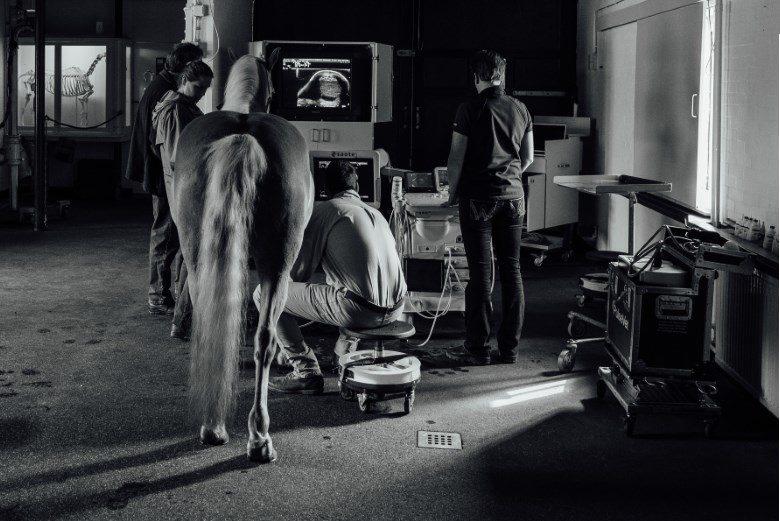 Peesscan (echografie)