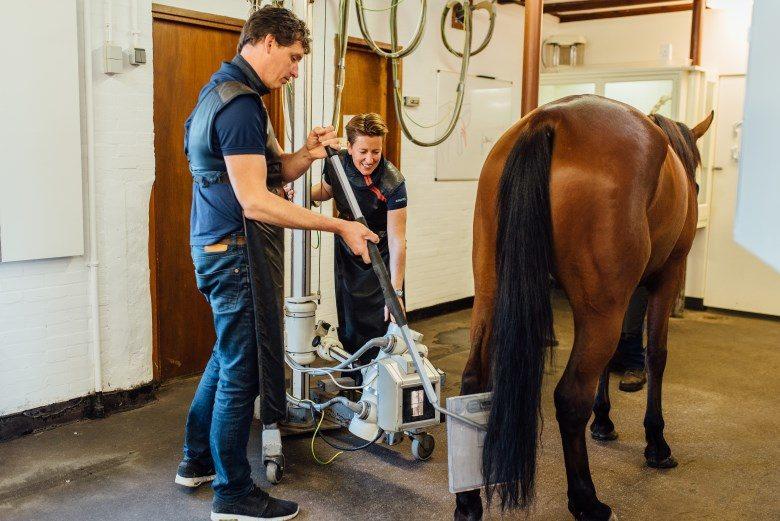 Röntgenonderzoek paard